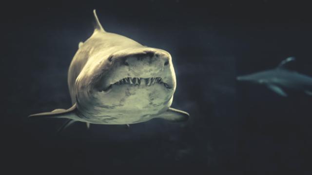 口を閉じたサメの顔